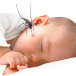 Sử dụng dầu tràm trị vết muỗi cắn cho trẻ